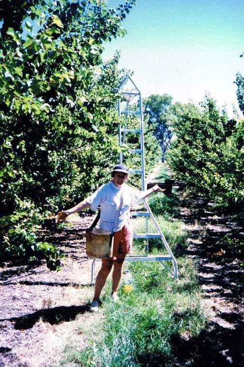 Fruit Picking, Waikerie, Southern Australia