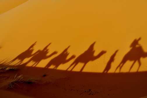 Saharan camel trek