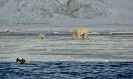 Bear and cub by glacier