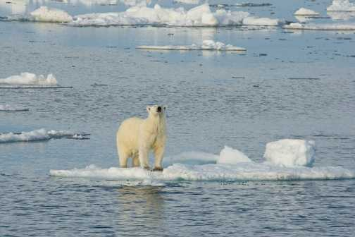 Bear on Small Ice Floe