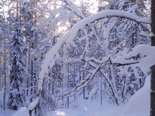 On the snowshoe walk