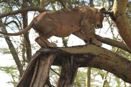 Yes -  ok I'll stand for you - Lake Nakuru NP