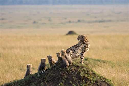 Wonderful Family Life