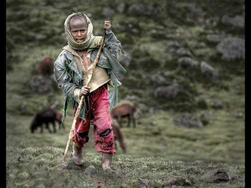 Young Shepherd