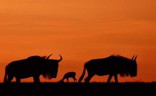 Mara before dawn