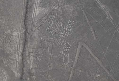 Nazca spider
