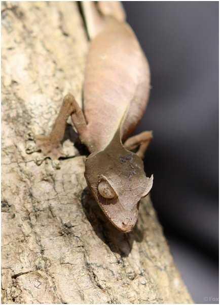 The weirdest reptiles