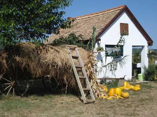 Self sufficient farm