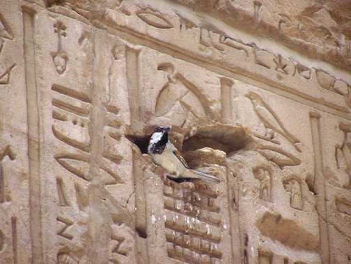 The Sparrow God
