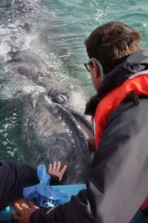 Scott with gray whale calf