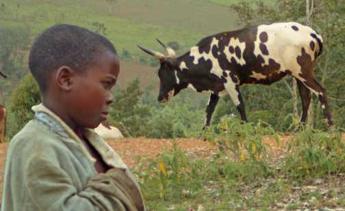 herdsboy