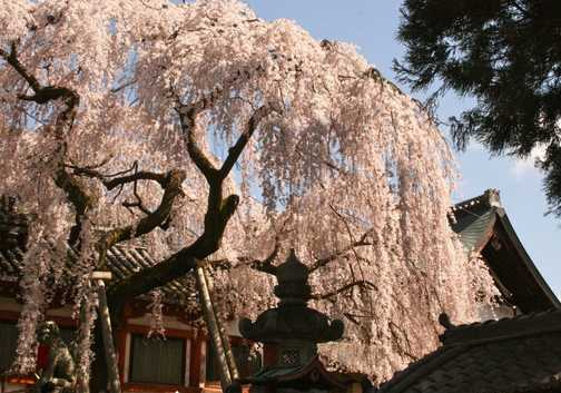Temple, Nara