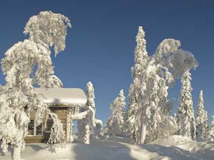 Snow trees 1.