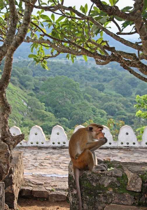 Cave temple, Dambulla