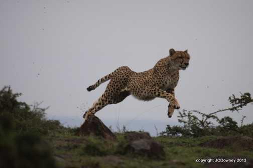 Narasha - flying high!