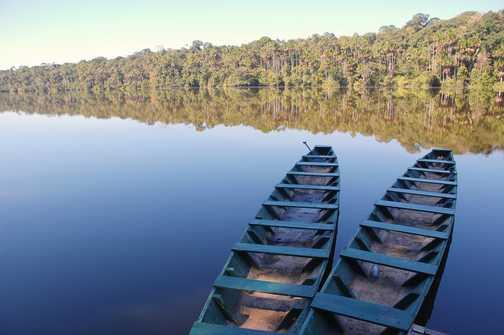 Tambopata Reserve - Amazon