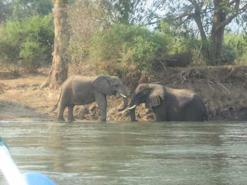 Two elephants playing at the water's edge