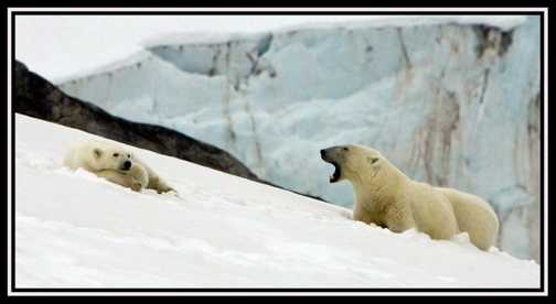PolarBearCub18