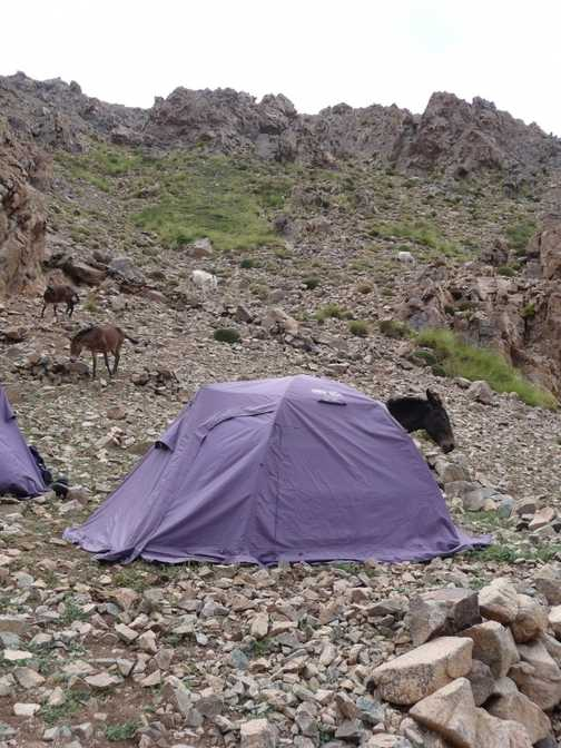 Even the mules get their own tents !
