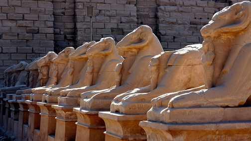 Ram-headed Lions