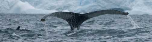 Whale tale!