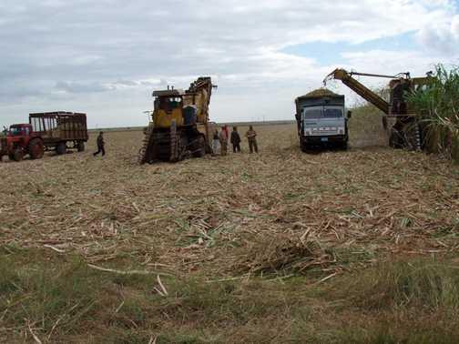 Sugar Harvest