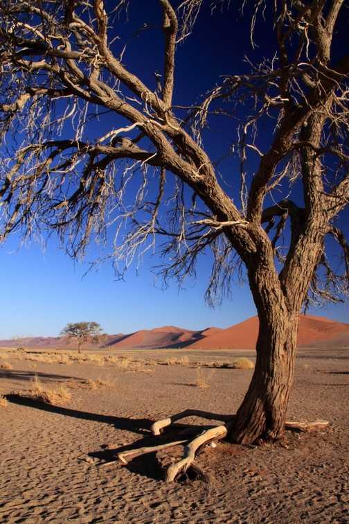 Dune 45 tree