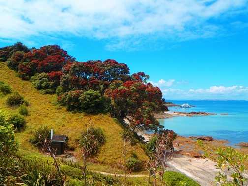 paradise - otherwise known as Tiritiri Matangi nr Auckland