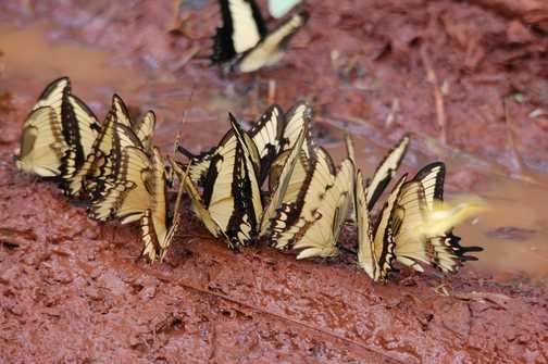 Butterflies just a few!