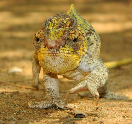 Lizard in reptile farm