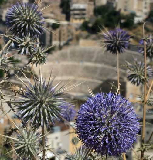 Flowers & Amphitheatre, Amman
