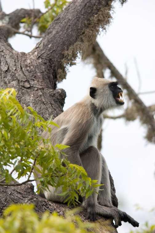 Owls Yala National Park