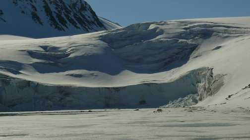 Mother and cub walk the glacier