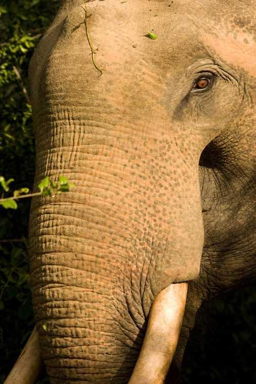 Monkey Yala National Park