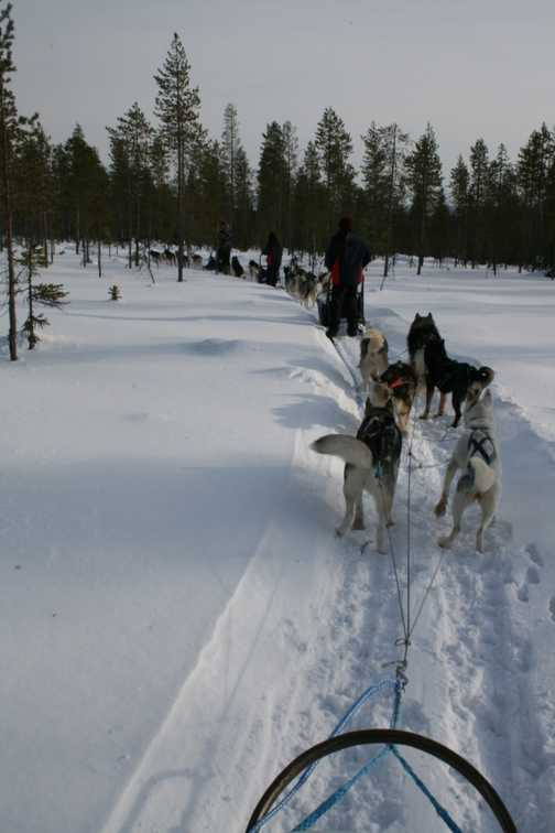 On the husky trail