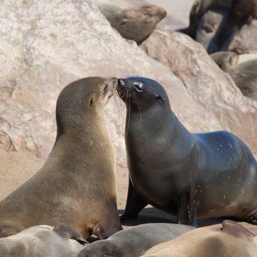 Cape Cross, Skeleton Coast