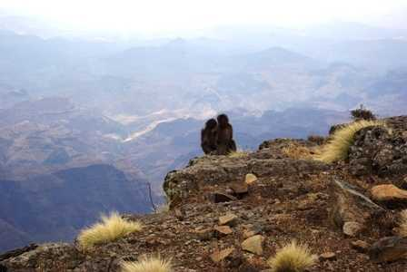 two monkeys about to fall off mountain