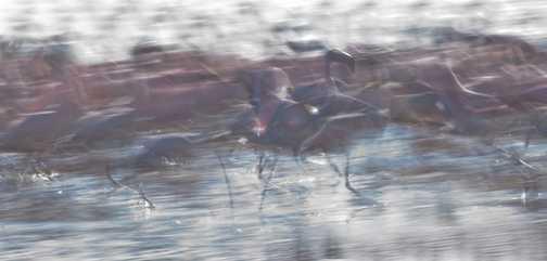 Flamingo Impressions