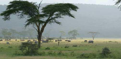 Rhino and calf in Lake Nakuru National Park