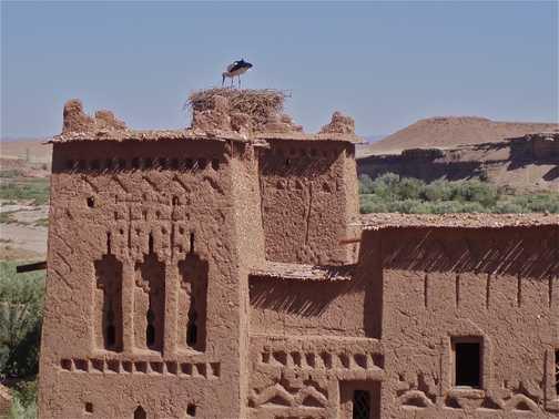 Stork, Ait Benhaddou