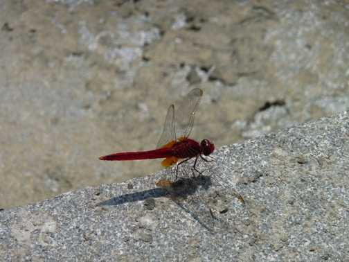 The elusive dragonfly