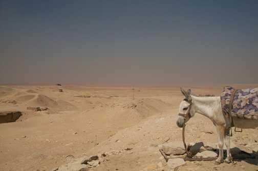 Donkey at Saqqara