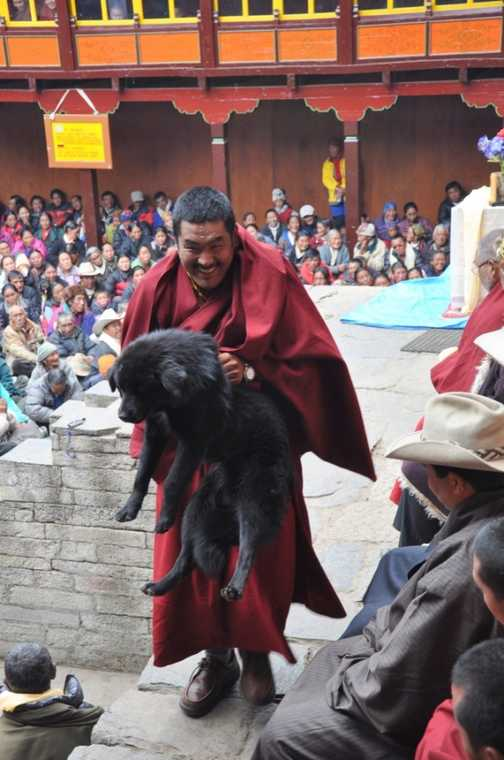 Monastery dog removal