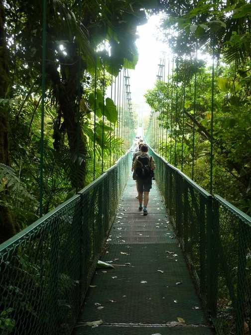 Above the tree tops, on the canopy walk - Monteverde NP