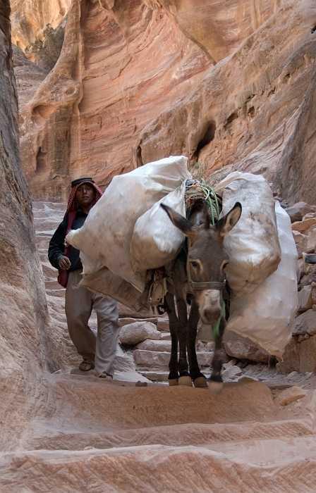 Petra - donkey-jam on the climb