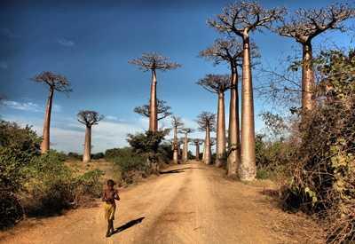 Baobab Avenue 2