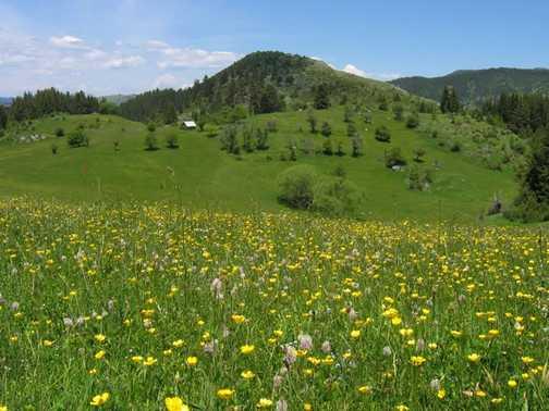 Trigrad Hay Meadows_2