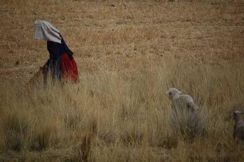 Shepherdess in the Altiplano