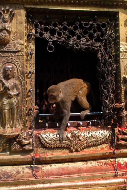 "Swayambhunath ""Monkey Temple"", Kathmandu"