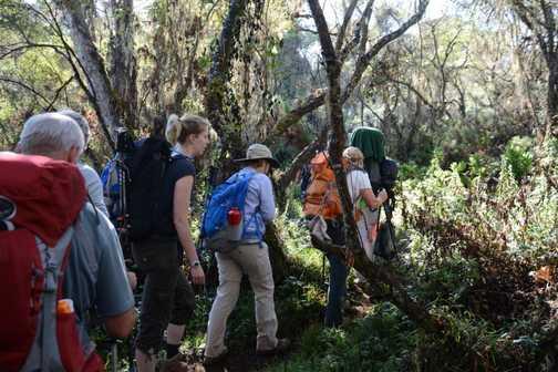 1st day in rainforest